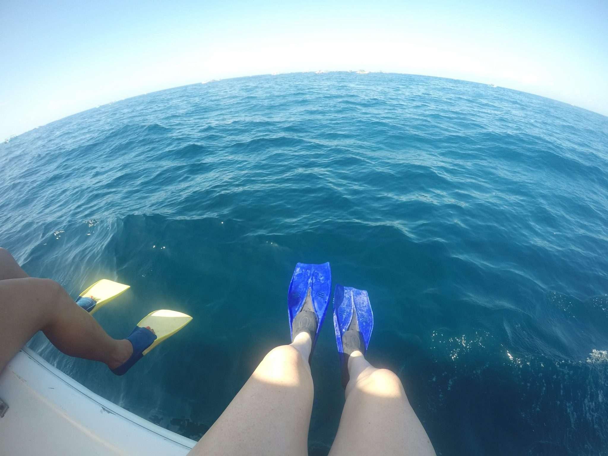 Whale Shark Tour