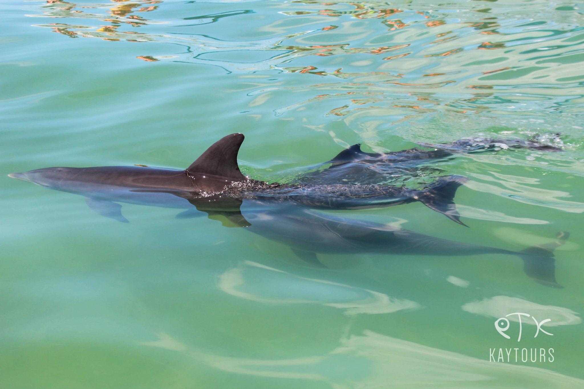 Sian Ka'an dolphin