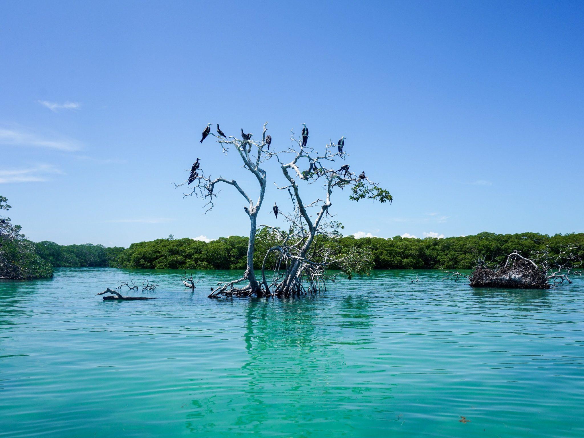 Sian Ka'an Bird Island