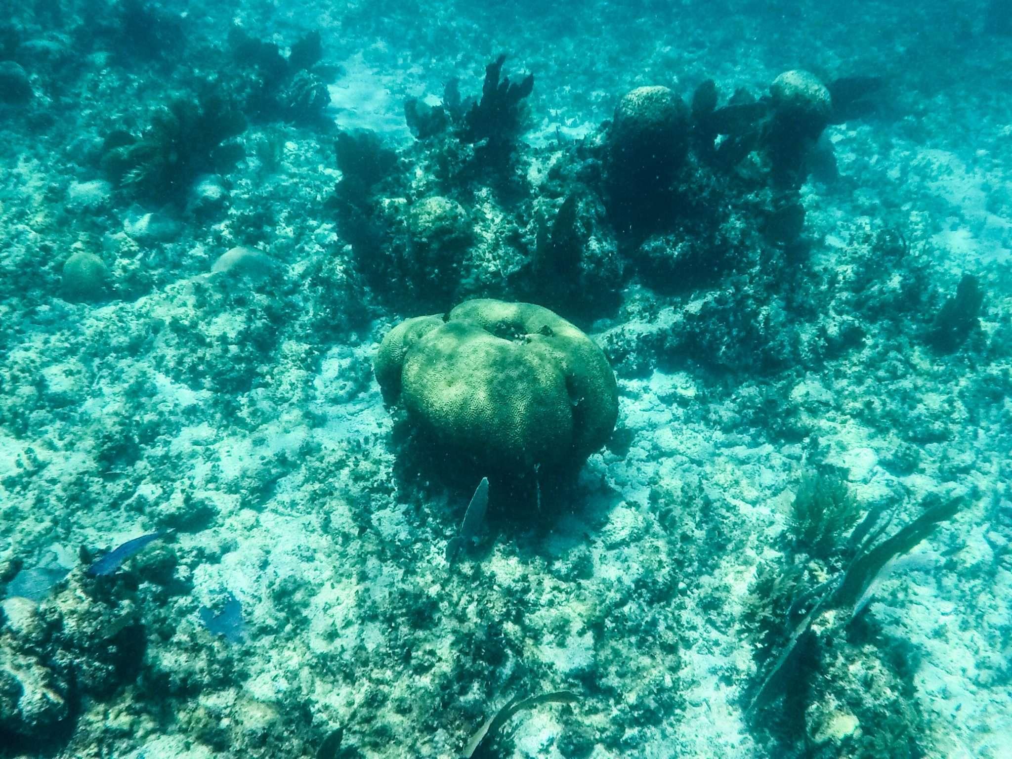 Sian Ka'an reef