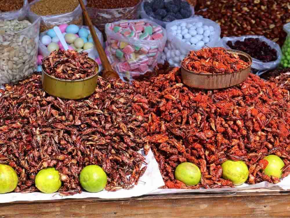 Grasshoppers Mexico